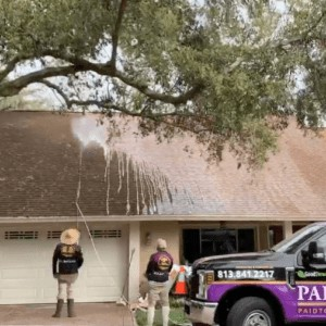 SoftWash   Roof & Exterior Cleaning Solutions